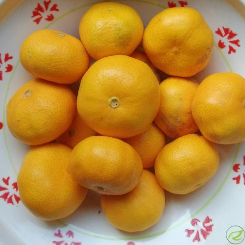 mandarine  za krepitev imunskega  sistema